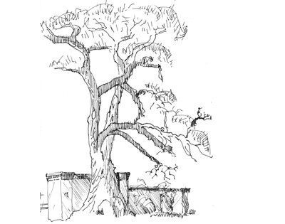 Cottonwood with Territorial Architectural Detail